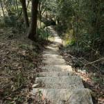 竹林小道1